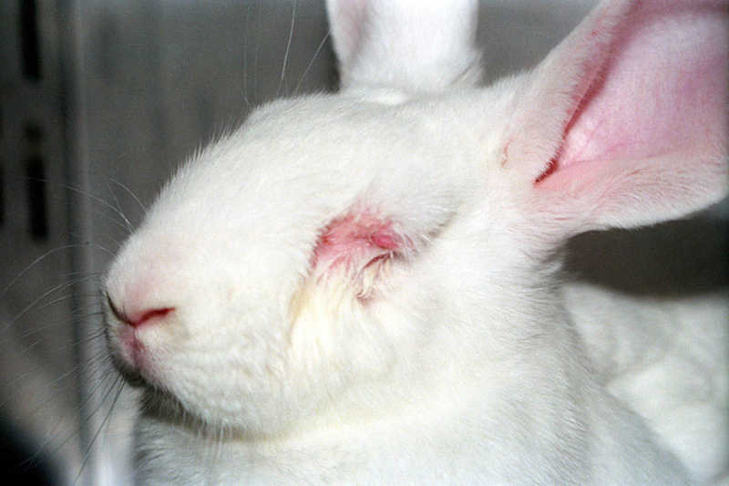 STF valida lei do Rio que proíbe uso de animais em teste de cosméticos