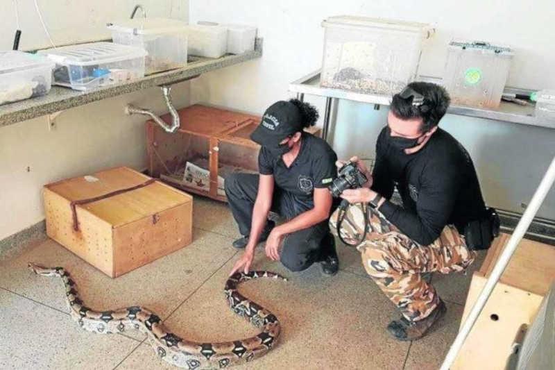 Distrito Federal se tornou centro logístico para o tráfico de animais silvestres
