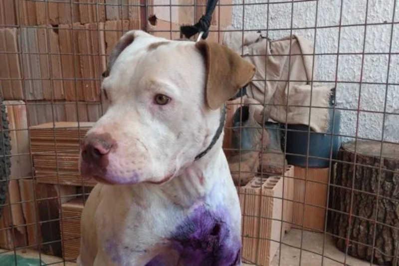 ONG do DF apoia Ibama em resgate de 13 cães vítimas de maus-tratos