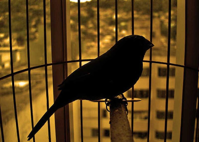 Projeto proíbe criação de pássaros em gaiolas ou viveiros domésticos no país