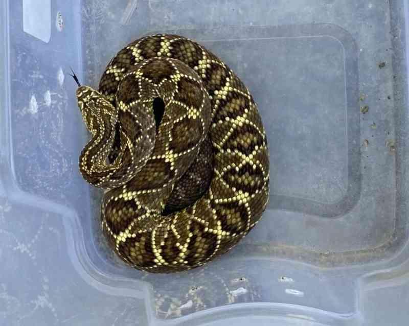 Cobras são encontradas em cativeiro no município de Vila Velha (ES) após denúncia