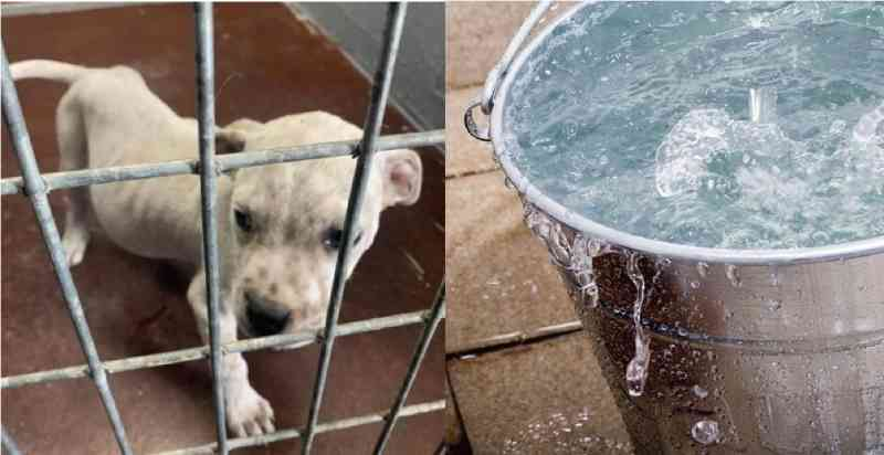 Cachorro alerta e homem salva filhote deixado para morrer dentro de um balde de água
