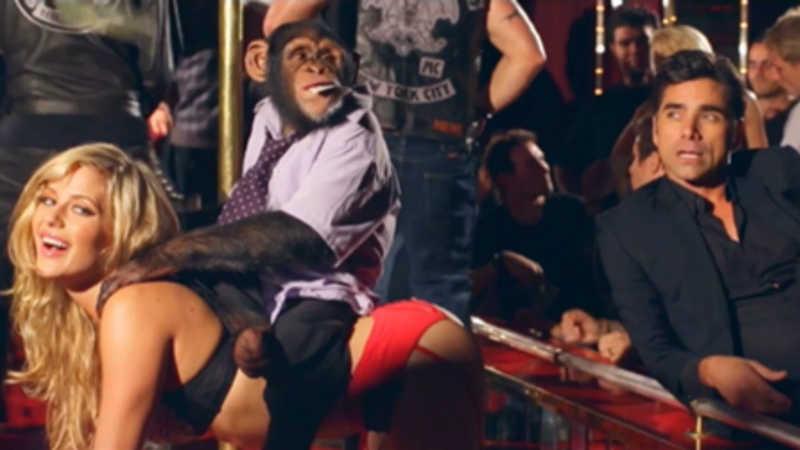 PETA escreve carta ao The Offspring repudiando o uso de chimpanzés no clipe de 'We Never Have Sex Anymore'