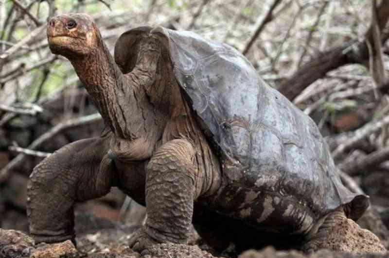 Policial é condenado a três anos de prisão por tráfico de tartarugas das Ilhas Galápagos
