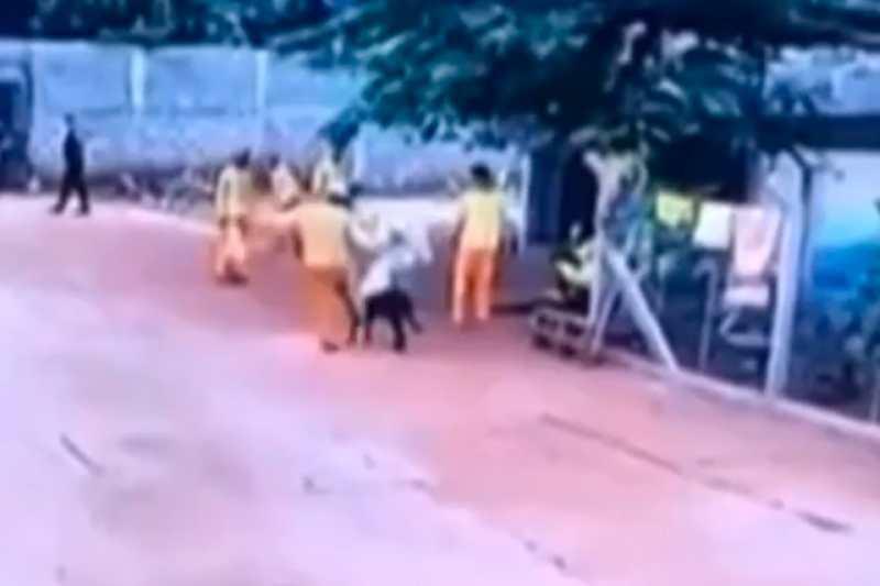 Homem é condenado a três anos de prisão por matar cão com um chute, em Cachoeira Alta, GO