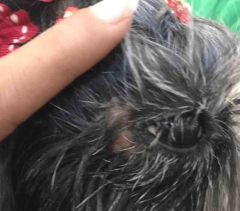 Homem é investigado por queimar cachorro com secador, em Uruaçu, GO