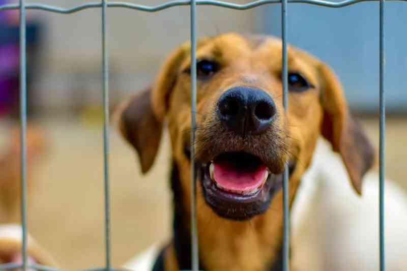Em Goiás, deputado propõe criação de conselhos tutelares para animais