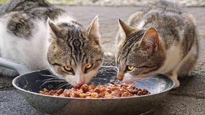 Grécia quer tornar esterilização de animais obrigatória