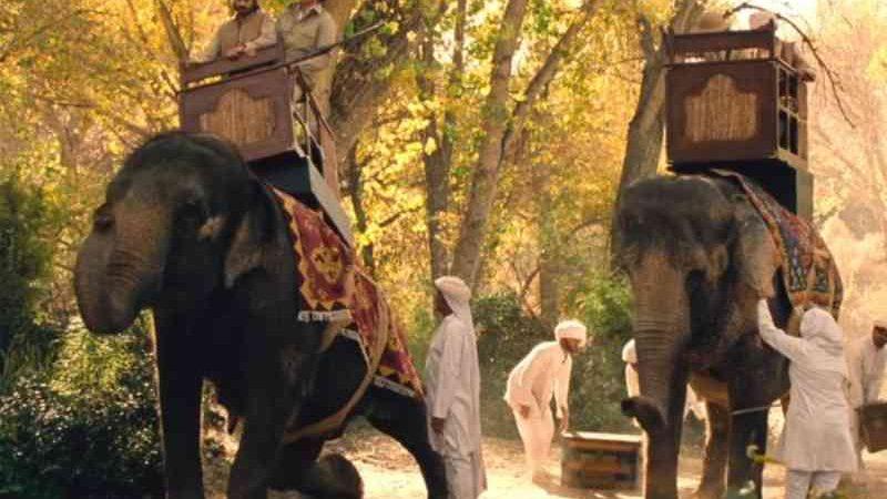 Elefante morre após filmagens e associação faz campanha para Hollywood parar de usar animais selvagens