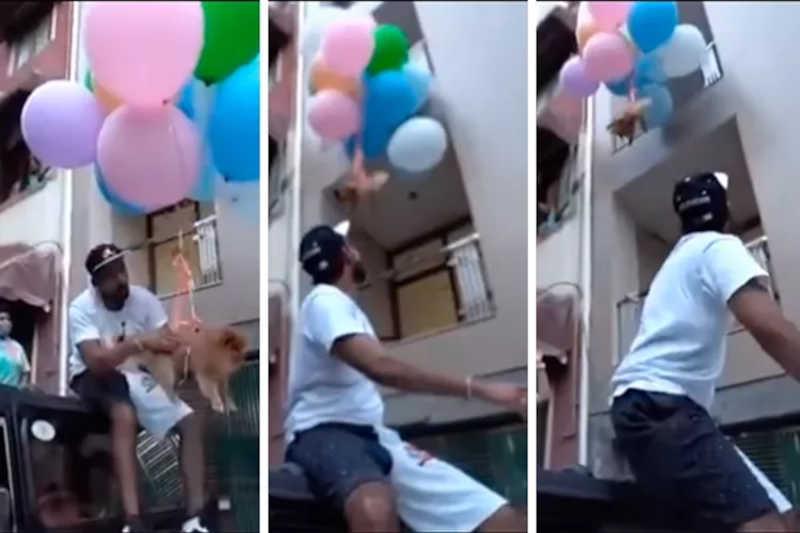 YouTuber é preso após prender cachorro a balões e soltá-lo no ar