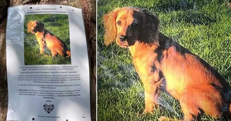 Cão morre após engolir máscara descartada