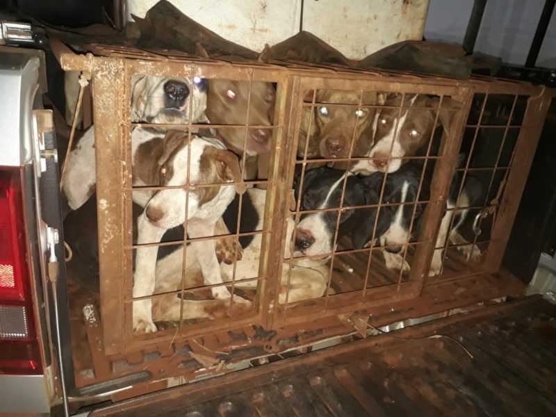 Dupla é detida por caça ilegal e maus-tratos a cães em Canápolis, MG