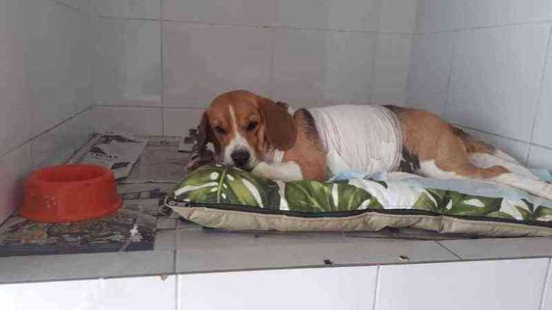 CRMV de Minas Gerais reconhece falta de ética de veterinário em um caso e analisará outro