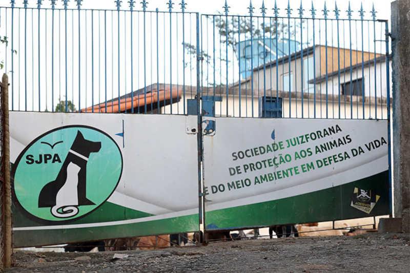 ONG mineira relata dificuldades com animais que ficaram 'órfãos' na pandemia