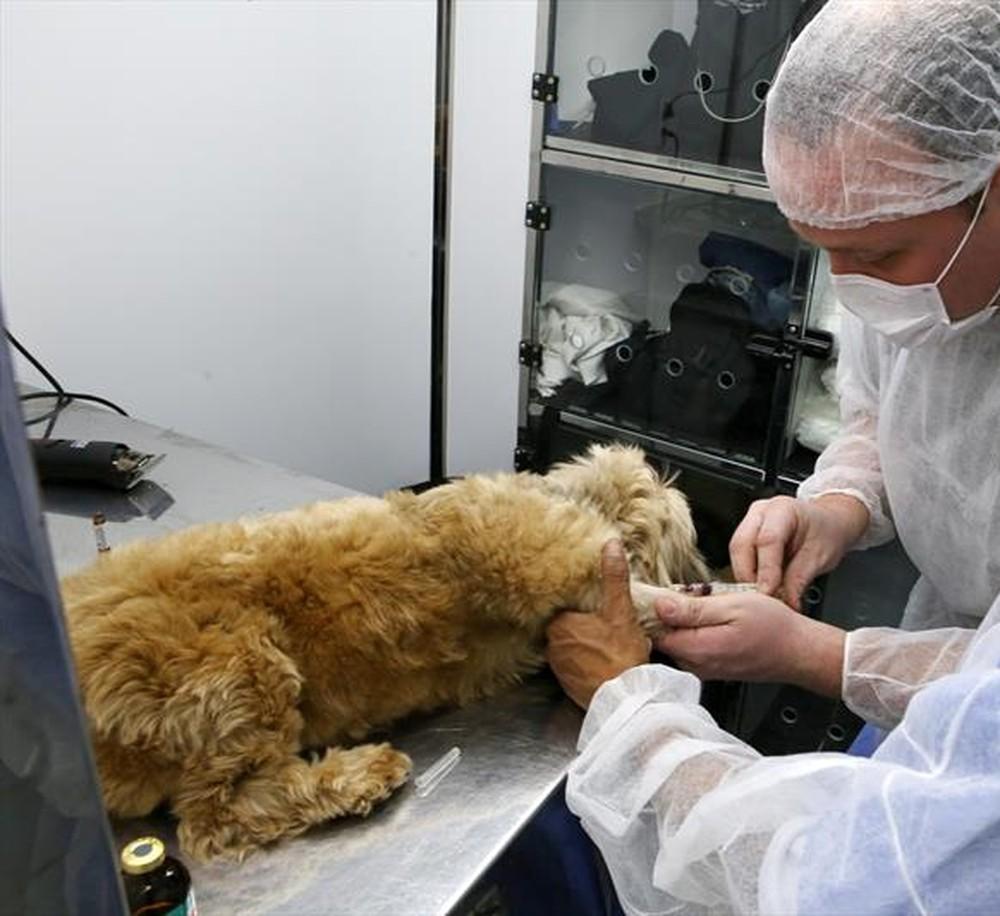 Prefeitura de Viçosa (MG) doa veículo para Sociedade de Proteção aos Animais