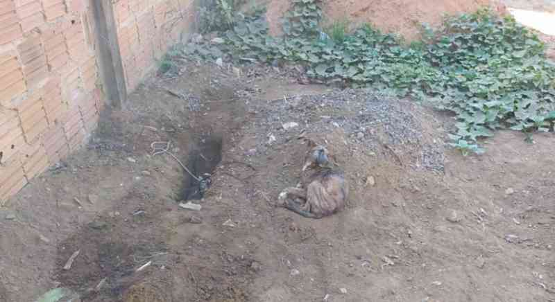 Homem é preso após denúncia de que iria enterrar cachorro ainda vivo no quintal