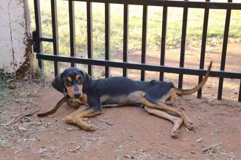 Vizinhos denunciam dono de bar por deixar cão com pata quebrada, sem comida