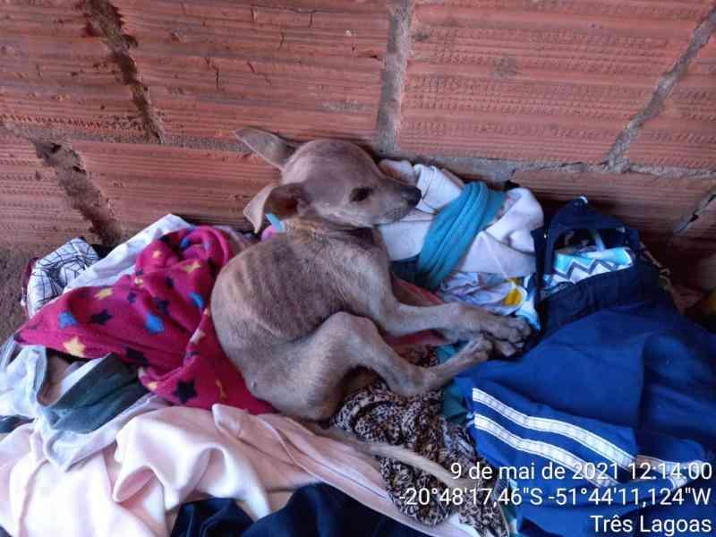 Polícia multa mulher em R$4 mil por se mudar e deixar cães e galinhas sem alimento e água em Três Lagoas, MS