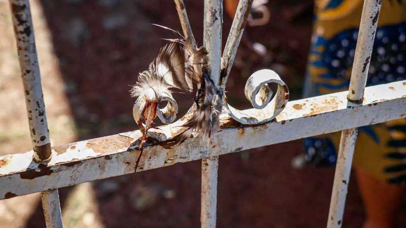 Briga de vizinhas acaba com galinha espetada em portão e vira caso de polícia