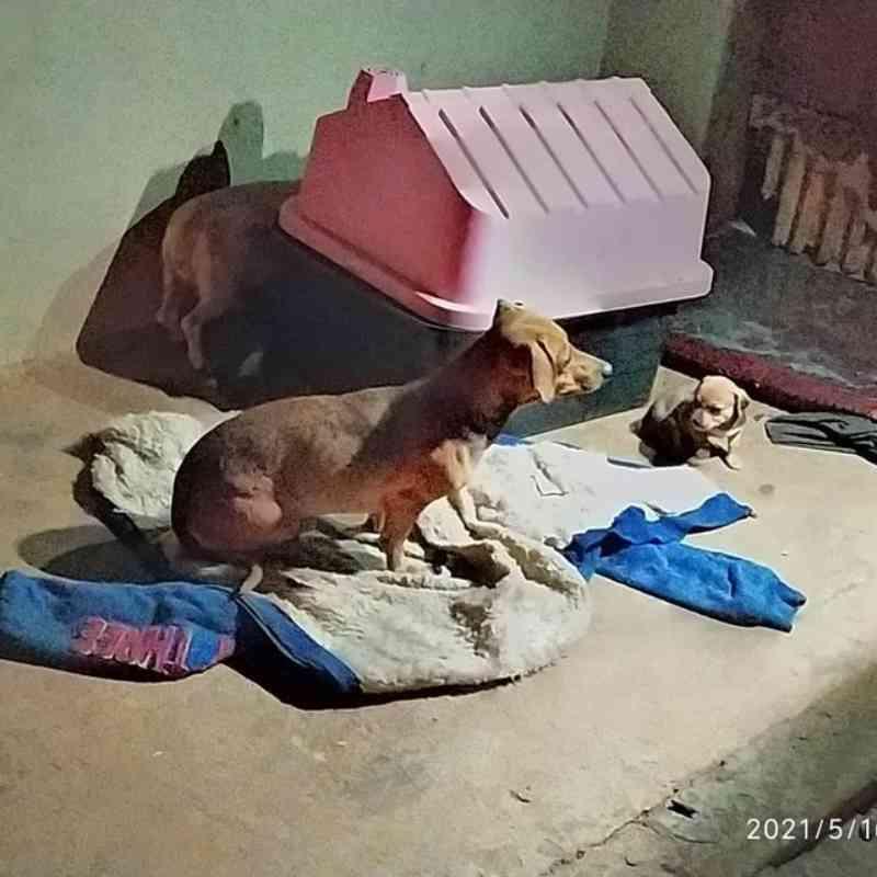 Denúncia leva polícia a achar homem que mudou de casa e abandonou 7 cães: 'Vizinho estava revoltado'