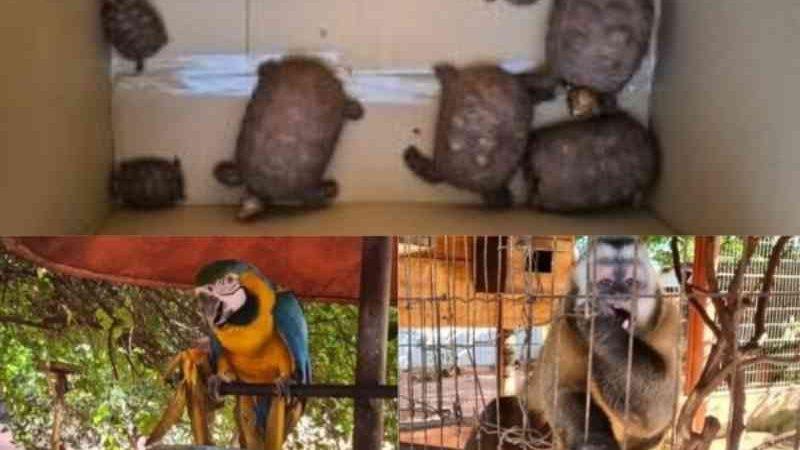 """""""Bom moço"""", idoso é multado em R$ 64 mil por enjaular e comercializar animais silvestres em MS"""
