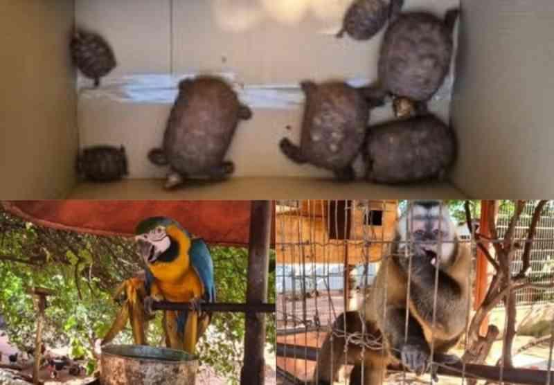 'Bom moço', idoso é multado em R$ 64 mil por enjaular e comercializar animais silvestres em MS
