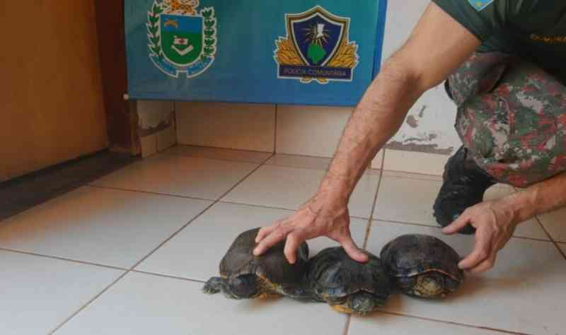 PMA encontra 33 animais exóticos em chácara com 'mini zoológico' em MS