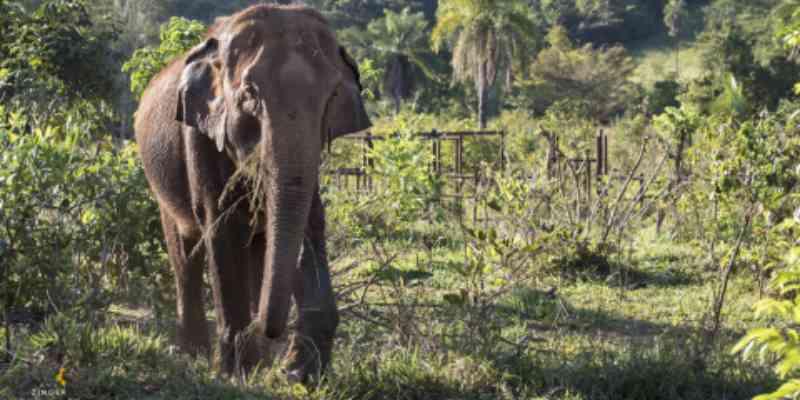 Santuário realiza campanha para trazer novo elefante para Chapada dos Guimarães, MT
