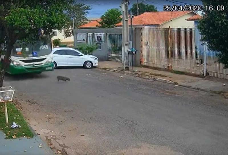 Após cão ser atropelado por ônibus, empresa e funcionário são intimados em Cuiabá, MT