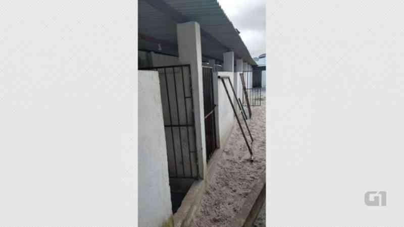 Cães da raça pit bull são resgatados pela PM em casa usada como 'rinha' em João Pessoa, PB