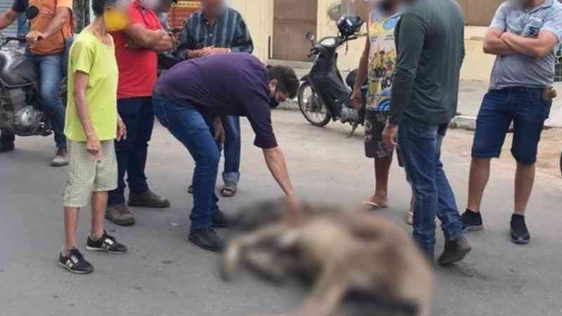 Animal que puxava carroça e passou mal com peso está bem e recuperado, diz secretário; caso aconteceu em Santa Cruz do Capibaribe, PE