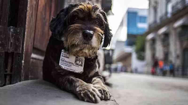 Cartão SUS para animais é aprovado por vereadores em Recife, PE