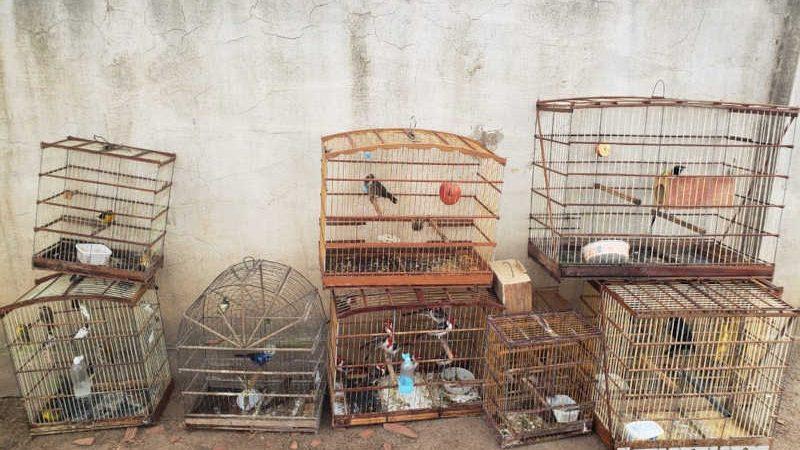 Animais foram resgatados em Caruaru — Foto: Divulgação