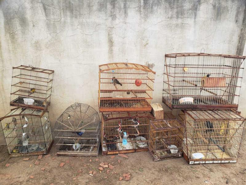 Operação 'Voo Livre' resgata 60 animais silvestres em Caruaru, PE