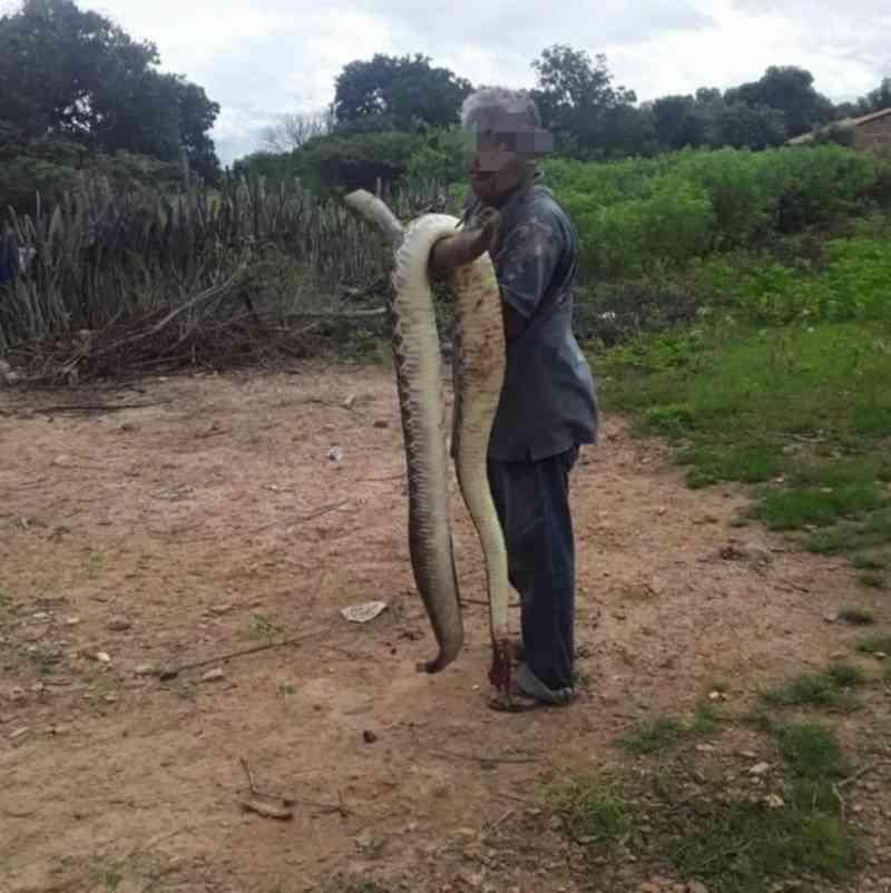 Cobra de 4 metros é decapitada e gera polêmica em cidade no Piauí
