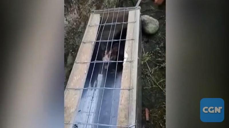 Homem que capturou e 'meteu fogo' em gambá vivo é identificado e autuado pela Polícia Civil