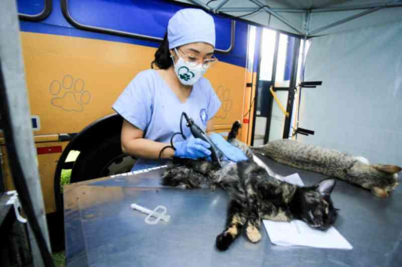 Projeto apoiado pelo Estado fará castração de cães e gatos das ilhas do Paraná