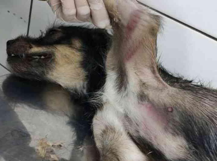 Homem é flagrado arremessando cadela à rua para ser atropelada em Trindade, RJ