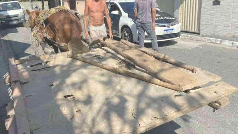 Animais maltratados são resgatados na Costa Verde do Rio de Janeiro