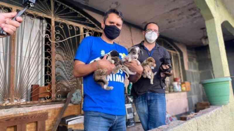 Animais vítimas de maus-tratos são resgatados e dono da casa é preso no Rio
