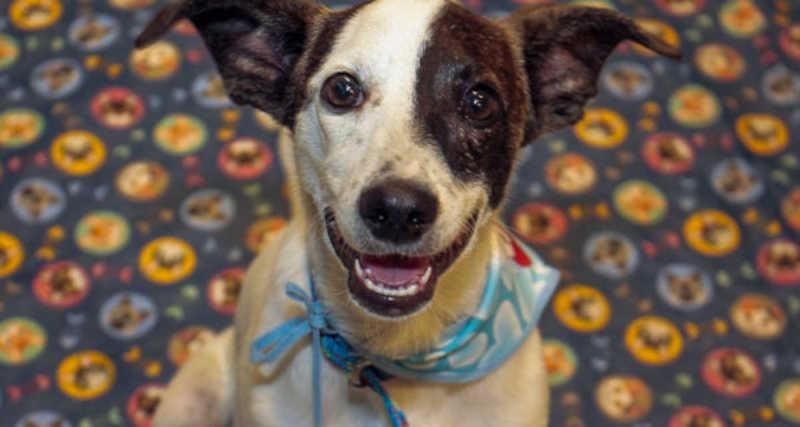 Em dezembro, o Governo do Estado lançou o selo PET Friendly / Amigo dos Animais, certificação concedida aos estabelecimentos que permitem a entrada de animais de estimação. - Crédito: Divulgação