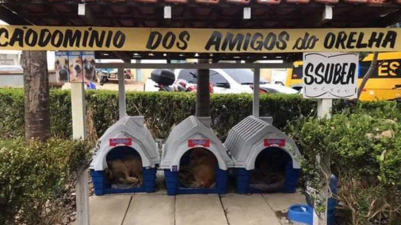 Cãodomínio fica no pátio da Prefeitura de Nova Friburgo (Luciana Pires)