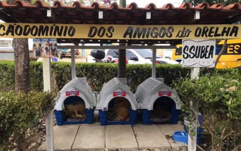 VÍDEO: Cães comunitários de Nova Friburgo (RJ) ganham 'Cãodomínio' no pátio da Prefeitura