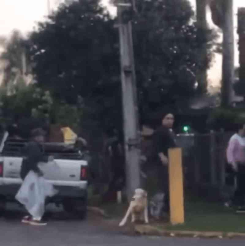 Em vídeo que circula pelas redes sociais, cães são agredidos em Campo Bom, RS