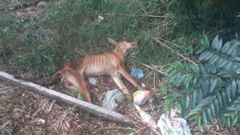 Mulher é presa em flagrante por maus-tratos contra cão em Estância Velha, RS