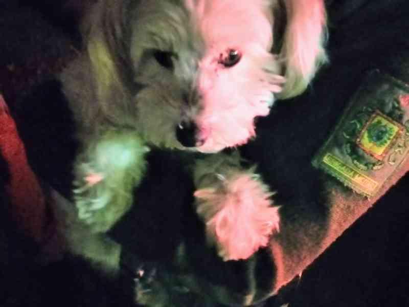 Brigada Militar prende homem por atirar em cãozinho em Gramado, RS