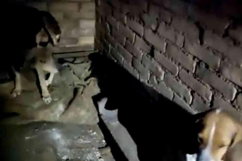 Polícia Civil localiza 14 cães em situação de maus-tratos em Mariana Pimentel, RS