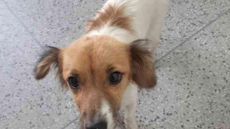 Idoso é flagrado estuprando cachorra em Sapucaia do Sul, RS