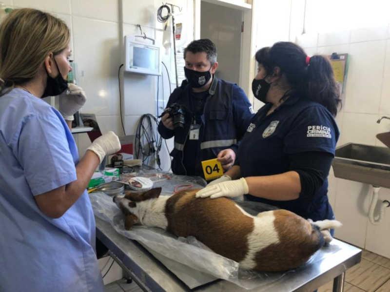 Perícia não descarta que idoso de Canoas (RS) estuprava cachorros