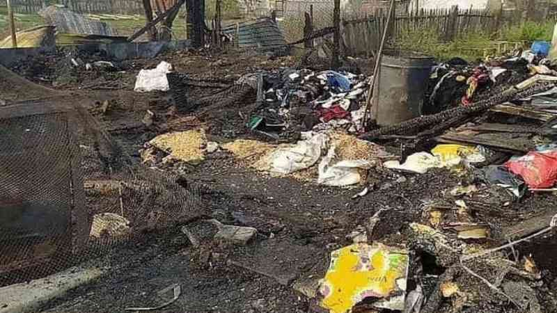 Mais de 30 cães são queimados vivos em abrigo de animais na Rússia